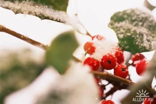 Новогодний и рождественский сборник