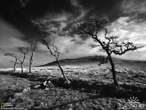 National Geographic Жизнь в черно - белом цвете (2011)