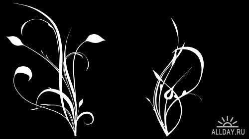 Video Footage - Flowers 1