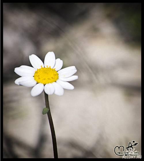Фотограф Alba Soler