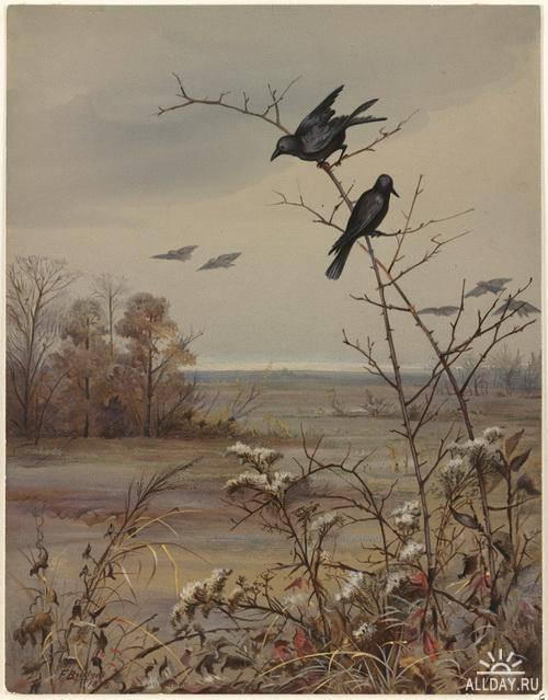 Fidelia Bridges (American, 1834-1924)