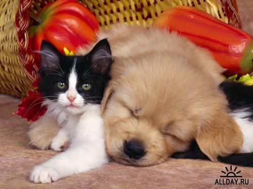 Обои с Животными