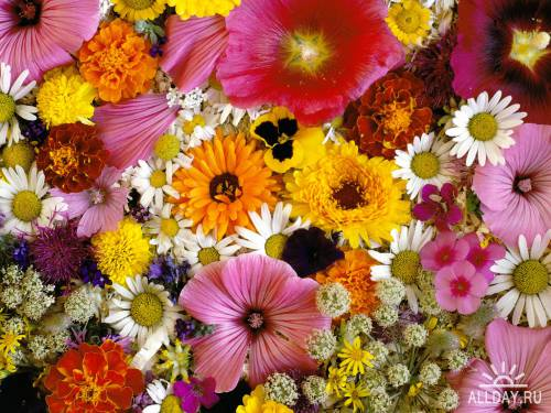 45 Colorful Incredible Flowers HQ Wallpapers