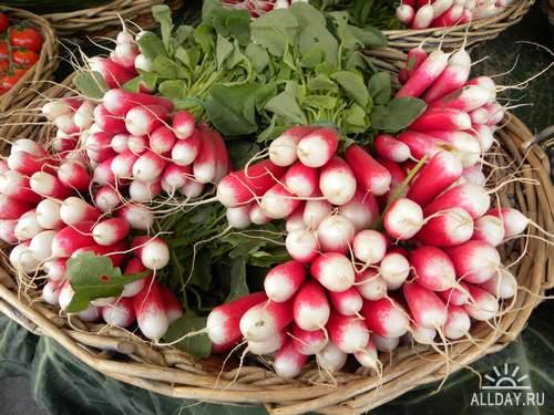 Vegetables - radish, radish, beet | Овощи - редис, редька, свекла