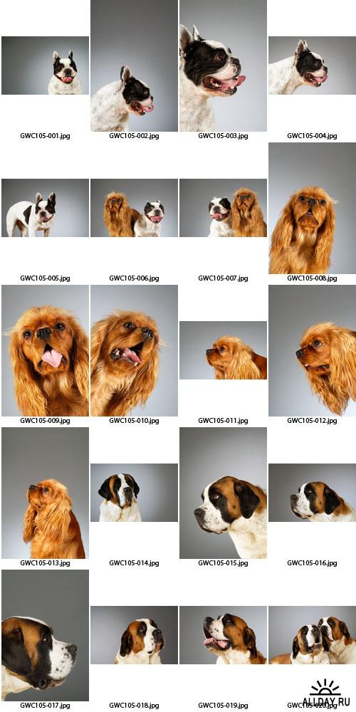 Glow Images | GWC105 | Dog Emotions