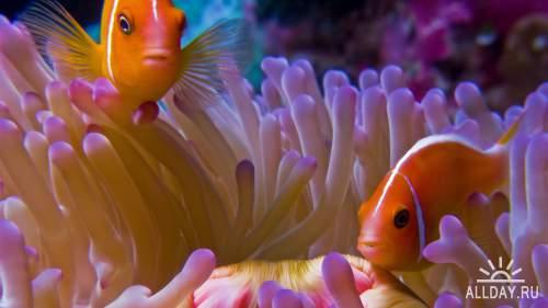 Обои с рыбами для рабочего стола