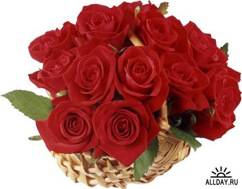 Фотосток: цветы - розы красные и алые (часть вторая)
