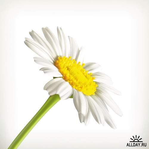Цветы и растения в векторе