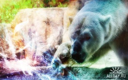 Animals WideScreen Wallpapers #24