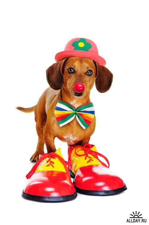 Красочные веселые клоуны | Colorful funny clowns Stock images - 25 HQ Jpg