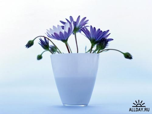 Flowers Wallpapers (2)