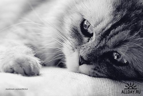 Фотограф Mariam Almazroui