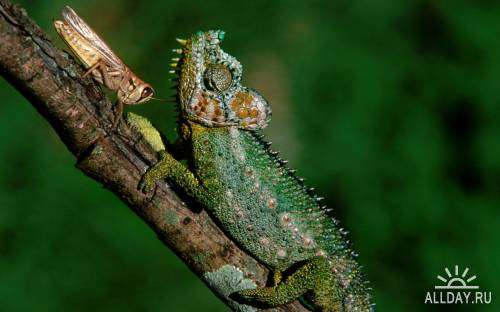 40 Reptiles Widescreen Wallpapers