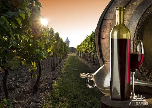 Виноградники и виноделие