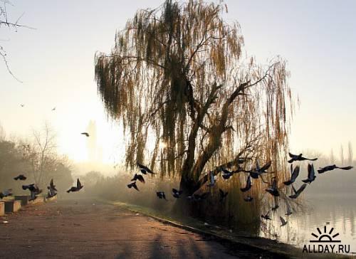 Zen-photo ч.26