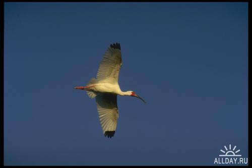 Corel Photo Libraries - COR-008.1 Birds II