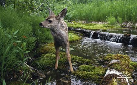 Animals WideScreen Wallpapers #25