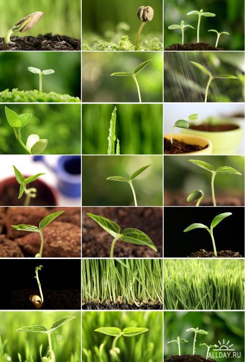 Зелёная трава