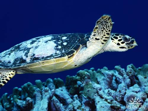 Ocean Life Wallpapers
