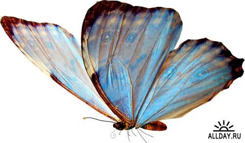 Клипарт - Бабочки (18 PSD файлов)