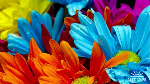 100 Amazing Mixed FullHD Wallpapers (Set 26)