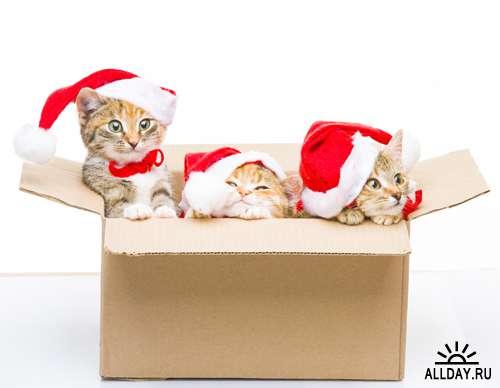Новогодние коты - Растровый клипарт | Christmas Cat - UHQ Stock Photo