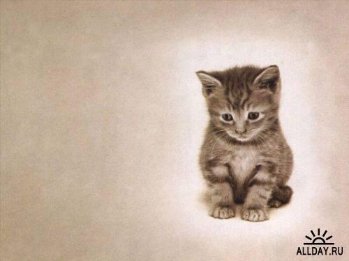 Сборник обоев с кошками