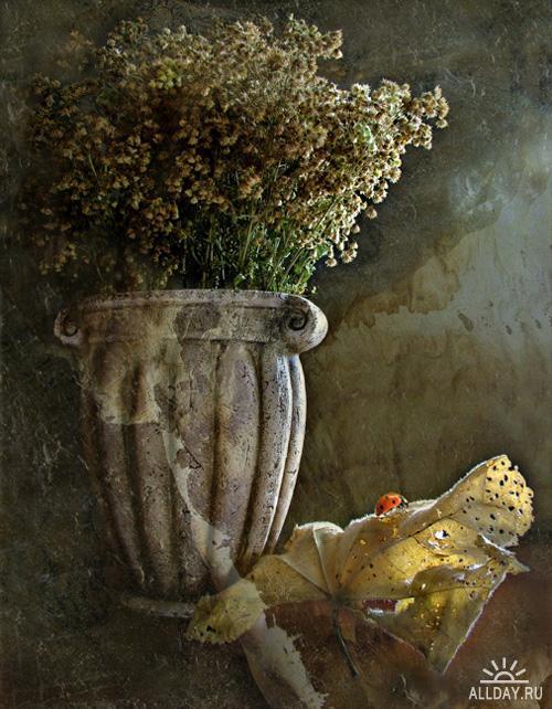 Работы фотографа Гусева Людмила (Mila) - Натюрморт | Still Lifes (Part 3)