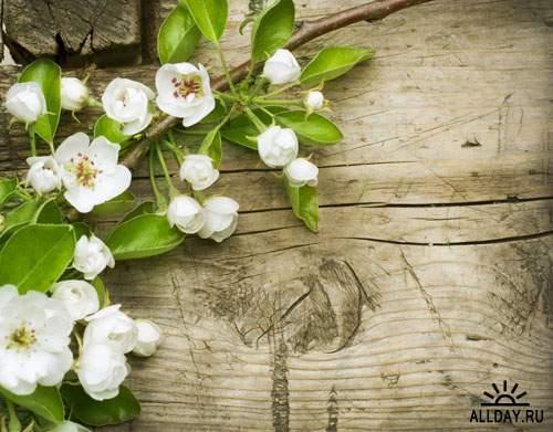 Весенние цветы 7 - Растровый клипарт   Spring Flowers 7 - UHQ Stock Photo
