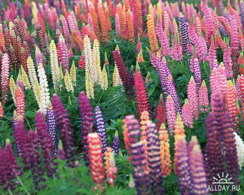 Клипарт -  Цветы и листья / MX-115 Flowers and Leaves