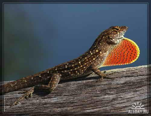 M. Cristian фотографии природы