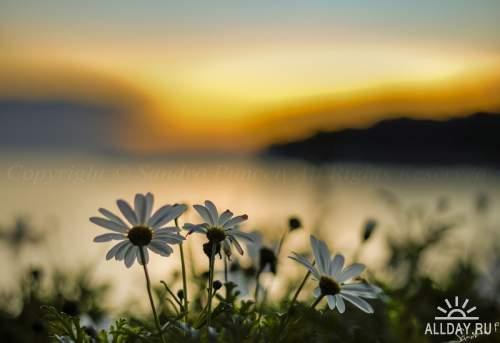 Мир в Фотографии - World In Photo 906