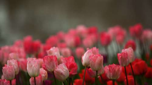 Коллекция прекрасных фото цветов для рабочего стола выпуск 36