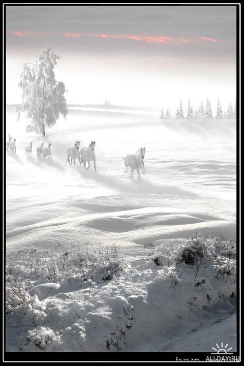 Художественная фотография - Igor Zenin