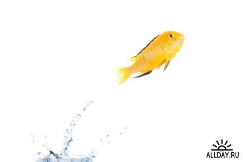 Stock photo: Jumping goldfishes