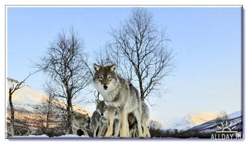 Фото о животных – Обои на комп (HD обои 1920х1080)