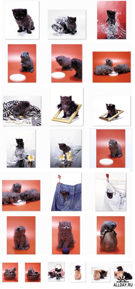 Kittens MC 020