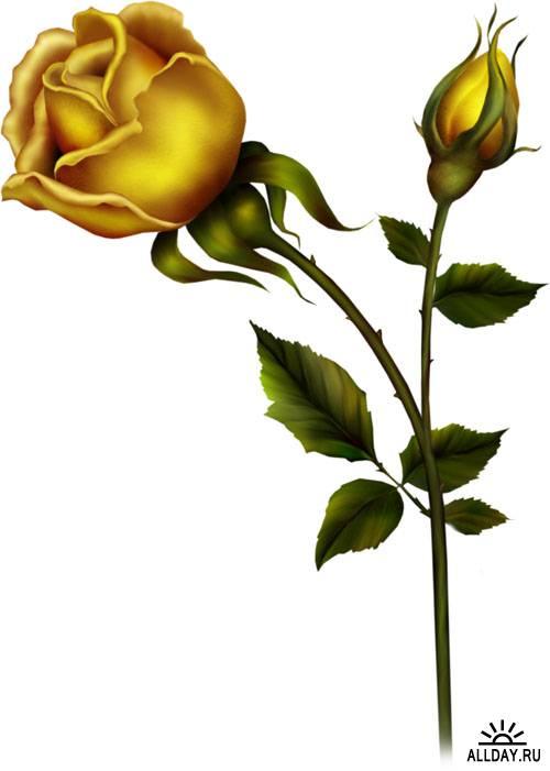 Скрап-набор - Желтые розы