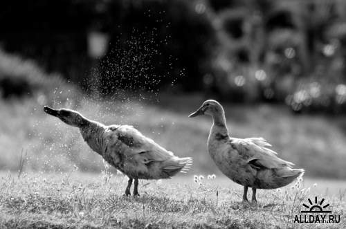 Мир в Фотографии - World In Photo 844