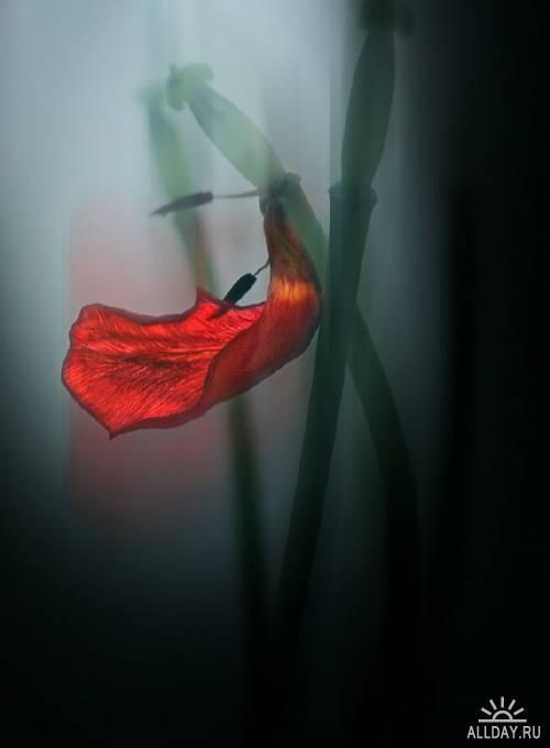 Zen-photo ч.8