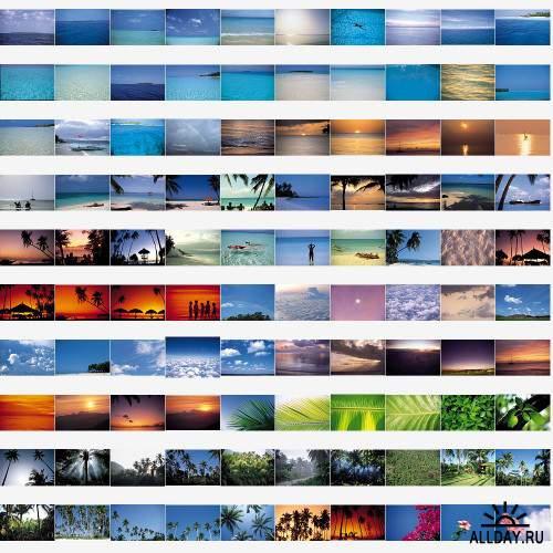 Stock photo - Tropical
