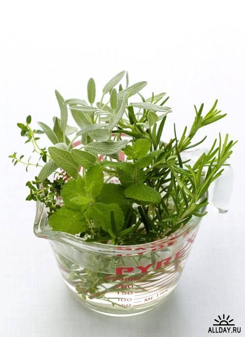 Клипарт - Садоводство