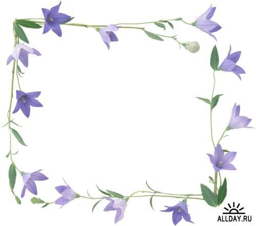 Floral Frame - cutouts 2 | Рамки - вырезы с цветами и листьями 2