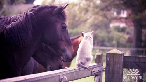 Сборник обоев с животными