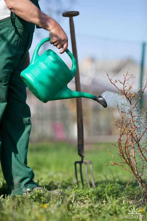 Stock Photo: Working in the garden   Работа в саду