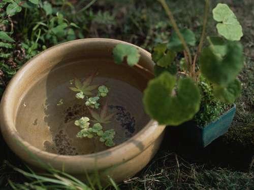Клипарт - DEX SH-LAE05 Botanical Style