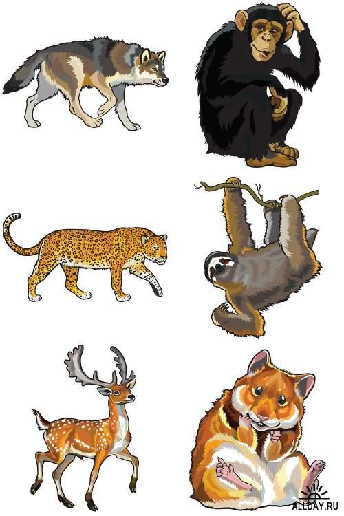 Дикие животные / Wild animals