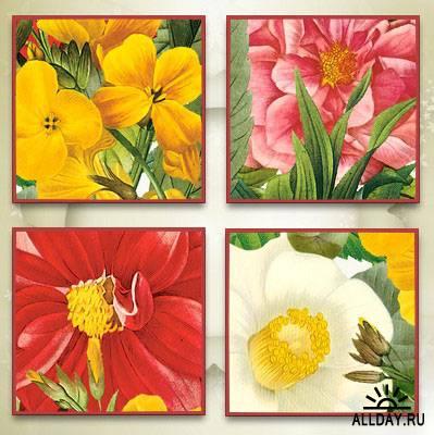 Cajoline - Vintage Flowers 5 - Personal Use