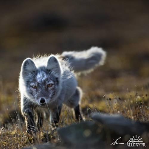 Фотограф Stian Holmen