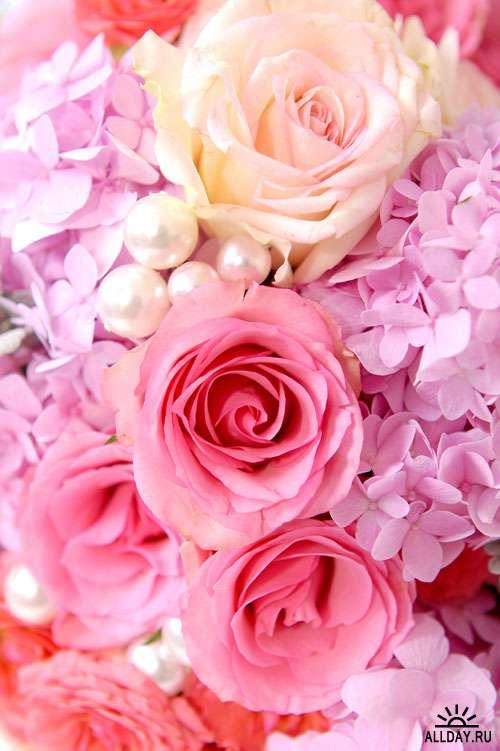 Цветы. Розы #2 - Растровый клипарт